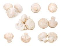 Raccolta bianca del fungo nel fondo bianco Fotografia Stock Libera da Diritti
