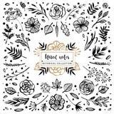 Raccolta botanica delle note floreali Fiori, rami e foglie Immagine Stock
