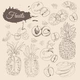 Raccolta d'annata dei frutti differenti Interi e elemets affettati sul fondo di seppia Abbozzo disegnato a mano illustrazione vettoriale