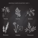 Raccolta d'annata delle erbe e delle piante mediche disegnate a mano cipresso, berberis, ginseng, rosmarino, assenzio romano, col royalty illustrazione gratis