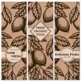 Raccolta d'annata verticale dell'insegna del limone Limoni disegnati a mano nell'illustrazione dell'inchiostro Fotografie Stock