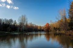 Raccolta degli alberi accanto ad un lago calmo sotto i cieli blu con le nuvole sparse fotografie stock libere da diritti