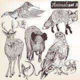 Raccolta degli animali dettagliati disegnati a mano di vettore Immagine Stock Libera da Diritti