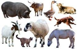 Raccolta degli animali domestici Immagini Stock