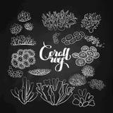 Raccolta degli elementi della barriera corallina Fotografie Stock