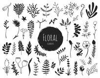 Raccolta degli elementi floreali disegnati a mano Fotografia Stock