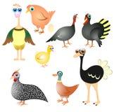 Raccolta degli uccelli dell'azienda agricola Immagini Stock
