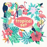 Raccolta degli uccelli, delle foglie di palma e dei fiori tropicali Immagini Stock Libere da Diritti