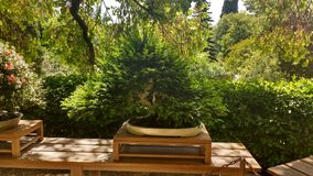 Raccolta dei bonsai Fotografie Stock