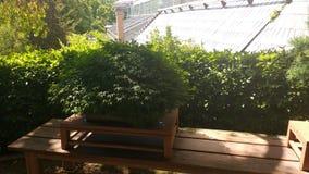 Raccolta dei bonsai Immagine Stock Libera da Diritti