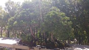 Raccolta dei bonsai Fotografie Stock Libere da Diritti
