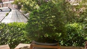 Raccolta dei bonsai Immagini Stock