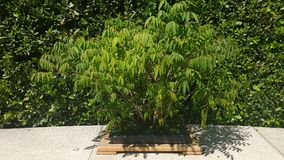 Raccolta dei bonsai Fotografia Stock