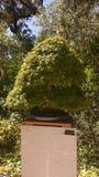 Raccolta dei bonsai Fotografia Stock Libera da Diritti