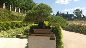 Raccolta dei bonsai Immagine Stock