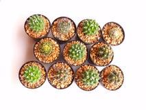 Raccolta dei cactus in un vaso sopra bianco Immagine Stock Libera da Diritti