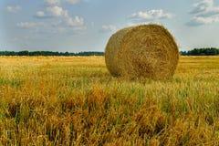 Raccolta dei campi Campo di agricoltura con il cielo Immagini Stock