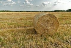 Raccolta dei campi Campo di agricoltura con il cielo Fotografie Stock