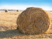 Raccolta dei campi Campo di agricoltura con il cielo Natura rurale nella terra dell'azienda agricola Fotografia Stock Libera da Diritti