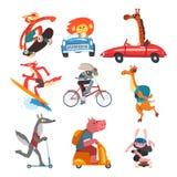 Raccolta dei caratteri animali divertenti facendo uso di vari tipi di veicoli, gatto, leone, giraffa, coniglio, cammello, lupo, m illustrazione vettoriale