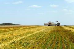 Raccolta dei cereali Campo Immagine Stock Libera da Diritti