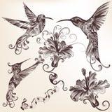 Raccolta dei colibrì disegnati a mano di vettore per progettazione royalty illustrazione gratis