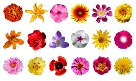 Raccolta dei fiori Fotografia Stock