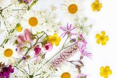 Raccolta dei fiori Immagine Stock