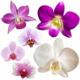 Raccolta dei fiori dell'orchidea Fotografia Stock