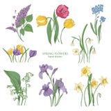 Raccolta dei fiori e delle angiosperme di fioritura della molla disegnati a mano nello stile d'annata - il tulipano, il lillà, na illustrazione di stock