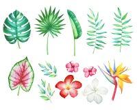 Raccolta dei fiori e delle piante tropicali Fotografia Stock Libera da Diritti