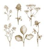 Raccolta dei fiori selvaggi illustrazione di stock