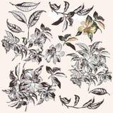 Raccolta dei fiori tropicali disegnati a mano di vettore per progettazione illustrazione di stock
