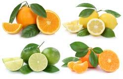 Raccolta dei frutti dei limoni delle arance isolata su bianco Immagine Stock