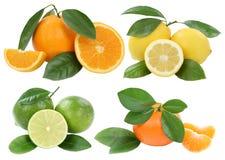 Raccolta dei frutti del limone del mandarino delle arance isolata su bianco Immagine Stock