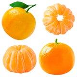Raccolta dei frutti dei mandarini isolata su bianco Immagini Stock Libere da Diritti