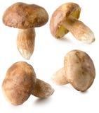 Raccolta dei funghi bianchi isolati sui precedenti bianchi Immagini Stock