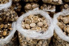 Raccolta dei funghi secchi dello shitake Fotografia Stock