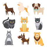 Raccolta dei gatti e delle razze differenti dei cani piano illustrazione di stock