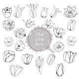 Raccolta dei germogli disegnati a mano differenti dei fiori del tulipano Composizione monocromatica con il cerchio ed il punto as royalty illustrazione gratis