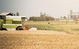 Raccolta dei giacimenti di grano di estate Fotografia Stock Libera da Diritti