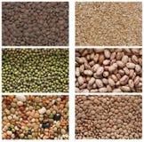 Raccolta dei legumi Immagine Stock