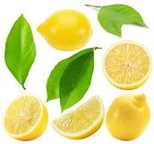 Raccolta dei limoni isolati sui precedenti bianchi Fotografia Stock Libera da Diritti