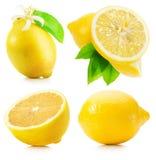 Raccolta dei limoni isolati sui precedenti bianchi Fotografie Stock