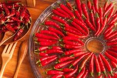 Raccolta dei peperoncini Preparando per l'essiccamento del condimento piccante Essiccatore elettrico dell'alimento fotografia stock libera da diritti