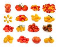 Raccolta dei pomodori isolati Fotografie Stock Libere da Diritti