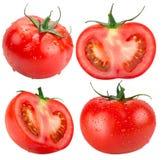 Raccolta dei pomodori isolati sui precedenti bianchi Fotografia Stock