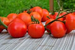 raccolta dei pomodori nel giardino che farmering Immagine Stock