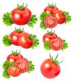 Raccolta dei pomodori rossi isolati su backgroud bianco Fotografie Stock