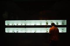 Raccolta dei rettili e delle ossa conservati in Musium Immagini Stock Libere da Diritti